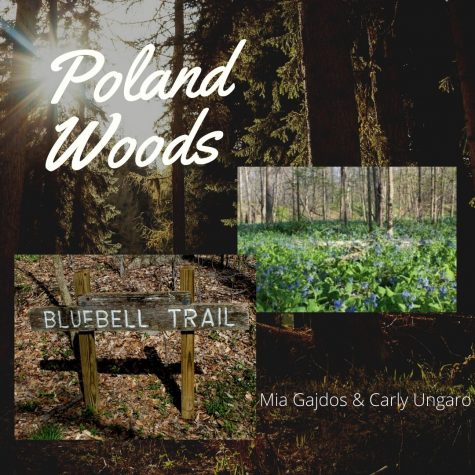 A Walk in Poland Woods