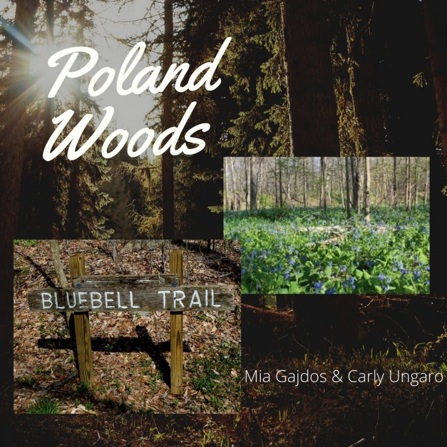 A+Walk+in+Poland+Woods